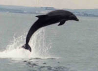 Dolphin attacks woman on board pleasure boat in New Zealand