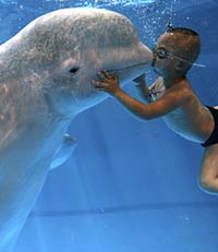 Four-year-old boy kisses huge beluga whale underwater in China