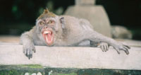 Wild monkey goes on rampage and injures several people