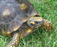 Police arrest man who tried to cut tortoise out of its shell