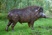 Wild boar kills farmer, injures two in central Vietnam