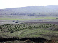 Syria accuses Israel of felling trees