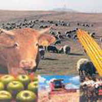 Kirov region prepares to head Russia's agricultural sector