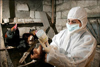 Bird flu outbreak in southern Russia; 35,000 chickens die