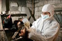 Bird flu outbreak in southern Russia; 35,000 chickens die