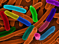 Bacteria Rule the World, Starting with Humans