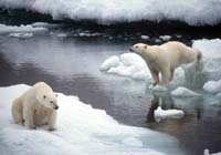 Bush administration proposes listing polar bears as threatened species