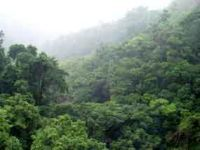 Study of disappearing African tropical forests. 46618.jpeg