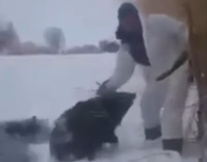 Man rescues three wild boars from ice trap. Video. 59620.jpeg