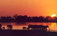 Conservation report highlights plight of wildlife