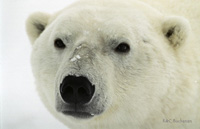 Berlin Zoo readies for polar bear cub's public debut