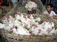 Bird flu outbreaks in Bangladesh