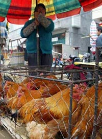 Japan renews poultry imports from Britain, Philippines
