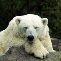 Media flock to Berlin Zoo for debut of polar bear cub
