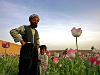 International Community Seems to Be Comfortable with Afghan Drug Trafficking