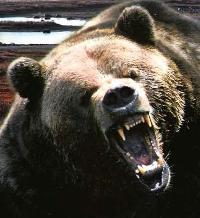 A bear attacks group of U.S. tourists in Romania
