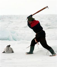 EU proposes total ban of products derived from seal hunting in Canada