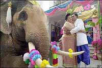 Thai couples mark Valentine's Day with elephant-back and cliff-side weddings