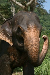 Elephants kill 8 in India