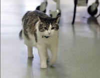 Cat predicts patients' deaths in nursing home