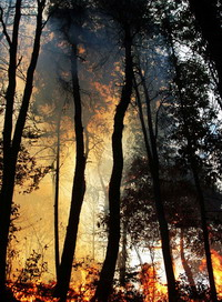 Forest fire breaks out in southern Greece