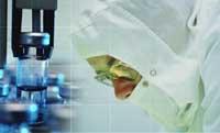 Britain to seek public opinion on human-animal stem cell studies