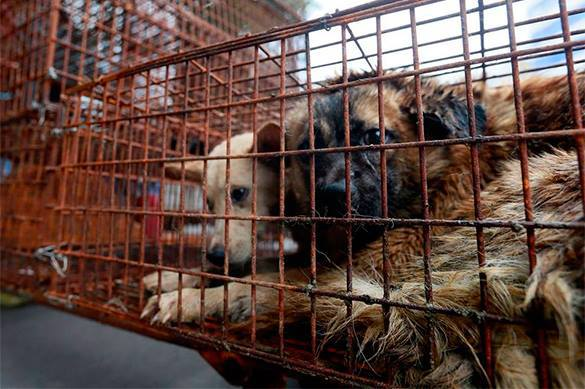 New York restaurants to sell dog meat. Dogs