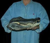 Sneak thief takes frozen crocodilia head from repair shop in Florida