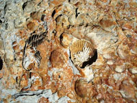 Are fossils really millions years old?