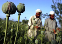 USA ready to lose more men in Afghanistan for the sake of opium drugs