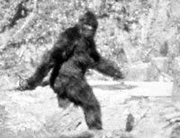 Fossett's searches may solve Bigfoot and Loch Ness monster mysteries
