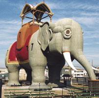 Zoo euthanizes Lucy the elephant, among oldest African elephants in captivity