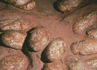 Fossilized dinosaur eggs illegally auctioned for 420,000 dollars
