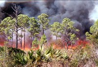 Hundreds of Florida residents wait to return to their wildfire threatened homes