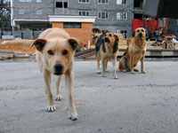 British woman mauled to death by stray dogs in Bulgaria