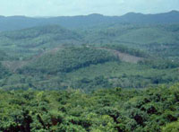 Brazil to get monetary support to protect forests