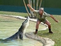 Steve Irwin dies on Great Barrier Reef filming new TV series for his daughter