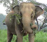 Mumbai bans elephants from city saying it's a cruel environment