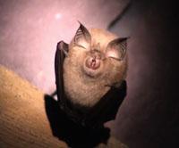 Dresden bridge to be built, despite concerns over rare bats