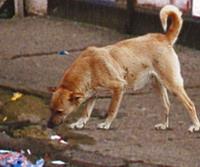 Stray dogs kill British woman