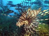 Researchers find new aquatic species at Hawaii's French Frigate Shoals