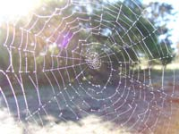 Scientists argue over origin of giant spider web in Texas park