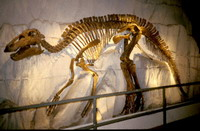 Skeleton of giant plant-eating dinosaur uncovered in Argentina