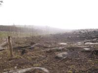 Tunguska Meteorite Created Devil's Cemetery in Russia's Siberia