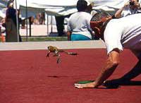 Rift over US jumping frog contest leads to rival competitions