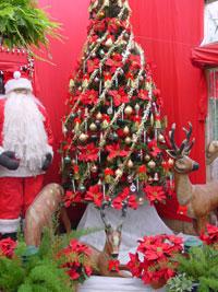 Burglars return stolen Christmas goods to New Zealand house