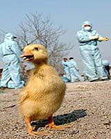 China denounces reported discovery of new bird flu strain as inaccurate