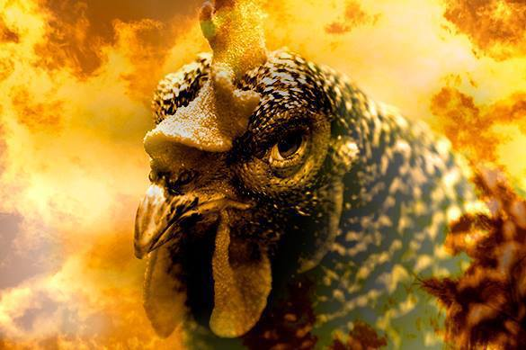 ISIS to conquer world with suicide chickens?. Animals