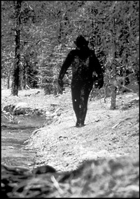Researchers may prove that Bigfoot exists