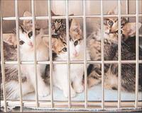 Taxpayer-financed animal control programs help to dispose of unwanted animals